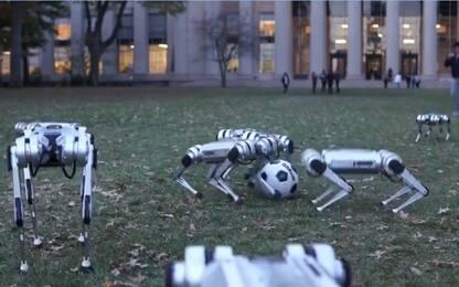 Arrivano i cani robot, giocano a calcio. VIDEO