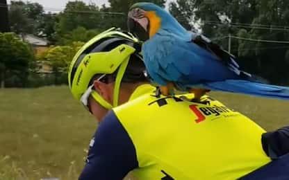 Il pappagallo di Scarponi vola con Antonio Nibali