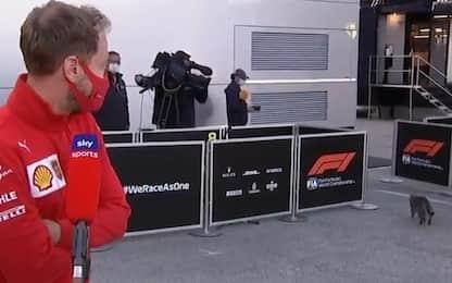 """Vettel, un gatto lo interrompe: """"Lui mi piace!"""""""