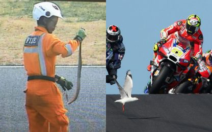 Dal cobra al gabbiano: quanti animali in MotoGP