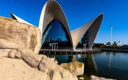 Sky VR46, Valencia: tra mare, arte e paella