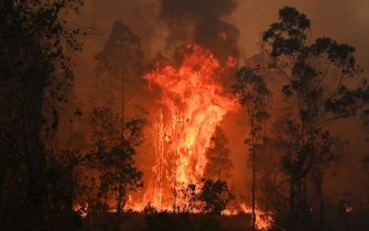 TOPSHOT - A fire rages in Bobin, 350km north of Sydney on November 9, 2019, as firefighters try to contain dozens of out-of-control blazes that are raging in the state of New South Wales. - Catastrophic bushfires in eastern Australia have killed at least three people and forced thousands from their homes, with the death toll expected to rise as firefighters struggle towards hard-to-reach communities. (Photo by PETER PARKS / AFP) (Photo by PETER PARKS/AFP via Getty Images)