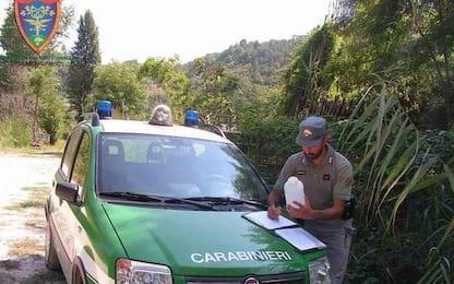 Cc forestali scoprono abusi edilizi, 3 denunce