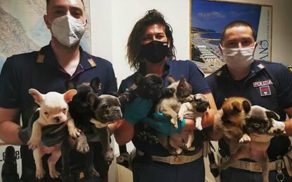 In A14 10 cuccioli cane su autocarro, trasporto illegale