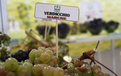 Marche a Vinitaly special edition, presto 'legge enoturismo'