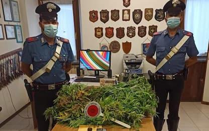 Cinque piante marijuana in casa, denunciato ventenne
