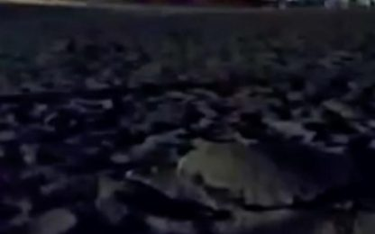 Tartaruga depone uova in Salento