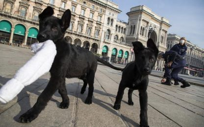 Covid:cani e gatti si infettano ma non pericolosi per l'uomo