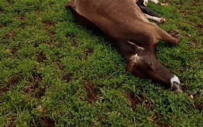 Maltempo: Coldiretti, fulmine uccide 10 mucche nel Barese