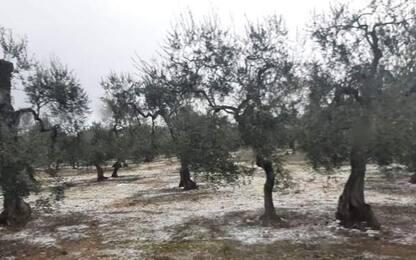Prima neve in Puglia, imbiancati campi Bat, fiocchi a Bari