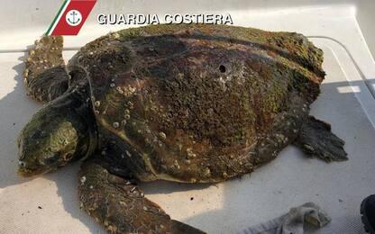 Tartaruga salvata da diportista, affidata a centro recupero