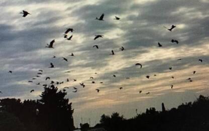 Stormo cicogne sorvola il Salento, avvistati 60 esemplari