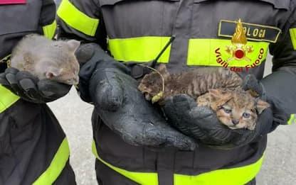 Incendio in sterpaglie nel Bolognese, Vvf salvano 3 gattini