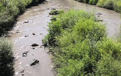 Fango sversato nel Reno, Wwf E-R: 'Disastro ambientale'