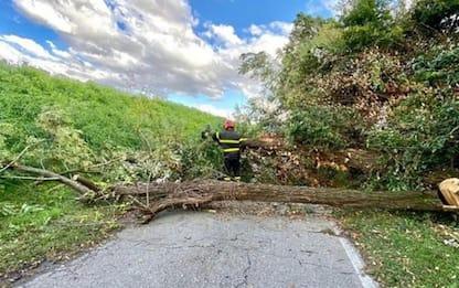 Decine di interventi per vento forte nel Bolognese