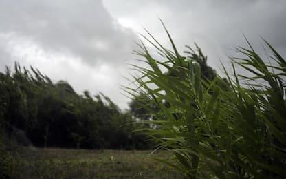Maltempo: E-R, allerta gialla per temporali e vento