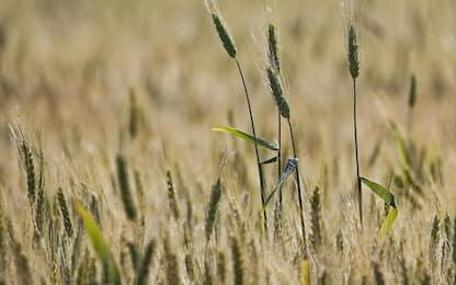 Focus agricoltura in Emilia-Romagna su Lepida Tv