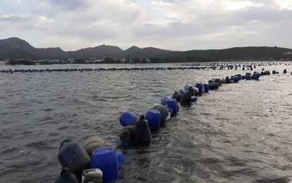 Nave-cargo disincagliata,produttori cozze quantificano danni