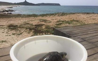 Recuperata e curata, la tartaruga Pio torna libera nel Sinis