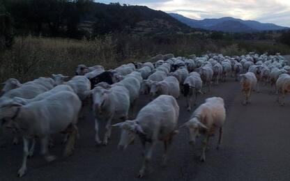 Gas serra -20% in 10 anni con moderna pastorizia
