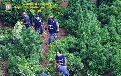 Nell'azienda agricola una piantagione di 120 piante cannabis