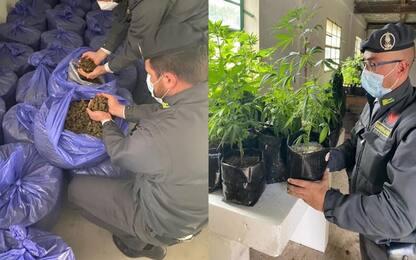 Sequestrati 210 chili di cannabis sativa, un indagato