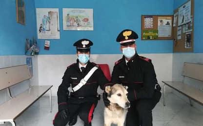 Legato a un albero e denutrito, cane salvato dai carabinieri