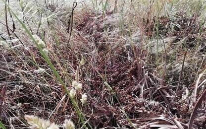 Invasione di cavallette in Sardegna, Copagri, danni ingenti