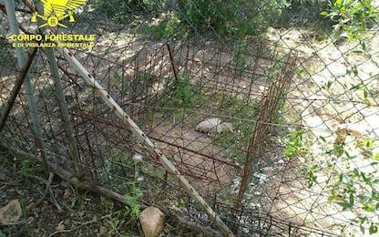 Crea abusivamente un'area per addestramento cani da caccia