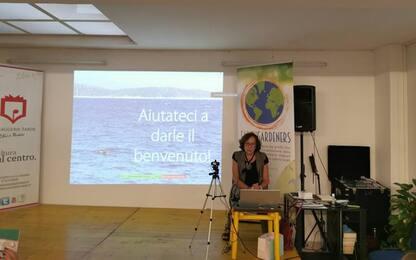 Foca monaca in Sardegna, progetto per favorire ripopolamento