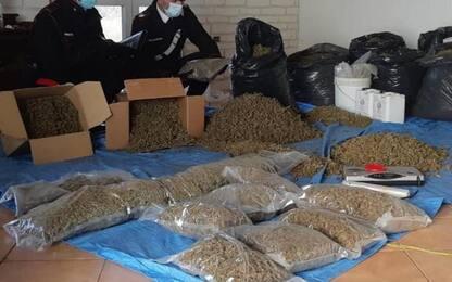 Scoperta nuova piantagione di cannabis, 2 arresti a Villasor
