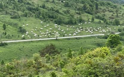 Pascolo abusivo nel cuore del Parco d'Abruzzo Lazio e Molise
