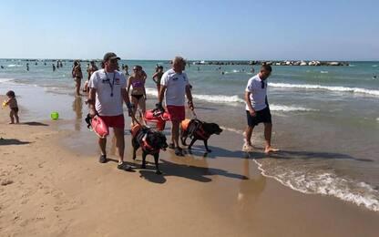 A Termoli i cani 'baywatch' in spiaggia libera