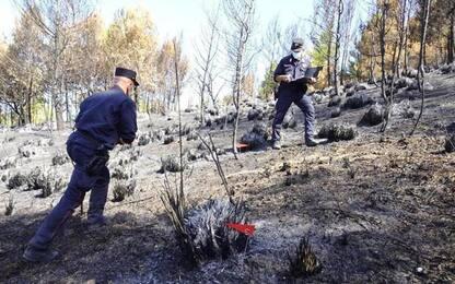 Bosco in fiamme, individuato presunto autore incendio