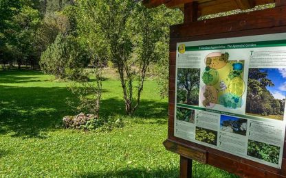 Parchi: censimento camosci in Pnalm, contati 675 esemplari