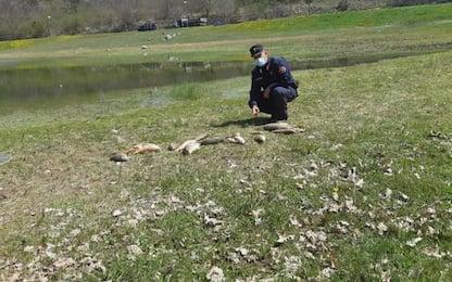 Moria di pesci nel Lago Carbone, indagano Cc Forestali