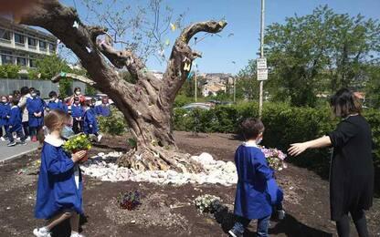 Un albero in memoria di maestra scomparsa a Campobasso