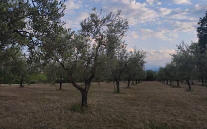 Agricoltura, a Campobasso 250 ex imprenditori da 7 regioni