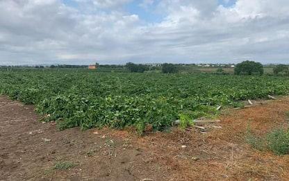 Maltempo, danni agricoltura, Molise chiede intervento Governo