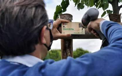 Ambiente: piantati primi 36 alberi dei cittadini a Firenze