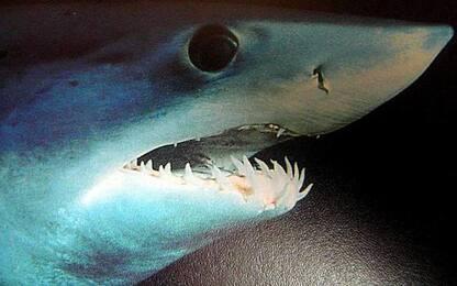 Pesca squalo Mako e rischia denuncia