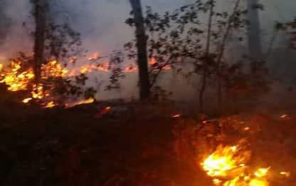 Incendi:ancora fuoco in pineta Viareggio