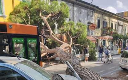 Maltempo:pino cade a Viareggio, 3 feriti