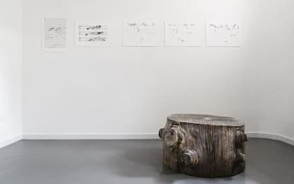Suoni e melodie dalle piante dell'Arno con Stromberg