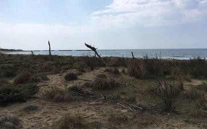 A S.Rossore pulita spiaggia Gombo, in aiuto anche dromedari