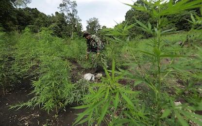 7 kg droga, sgominata banda Chiavari