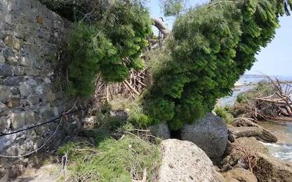 Crolla albero su scogliera, ferita bagnante a Ventimiglia