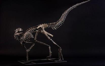 Casa d'aste genovese 'batte' dinosauro per 300 mila euro