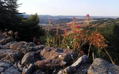 Fiori appenninici in posa, al via il contest 'Floranet'