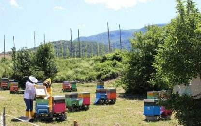 Miele: ecco il 'Millefiori' dell'Alto Molise